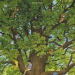 Mon arbre – Gerda Muller